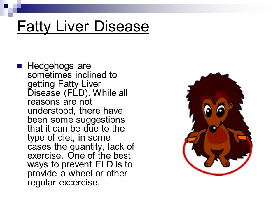 Fatty Liver Disease Hedgehogs are sometimes inclined to getting Fatty Liver Disease (FLD). While all reasons are not understood, there have been some