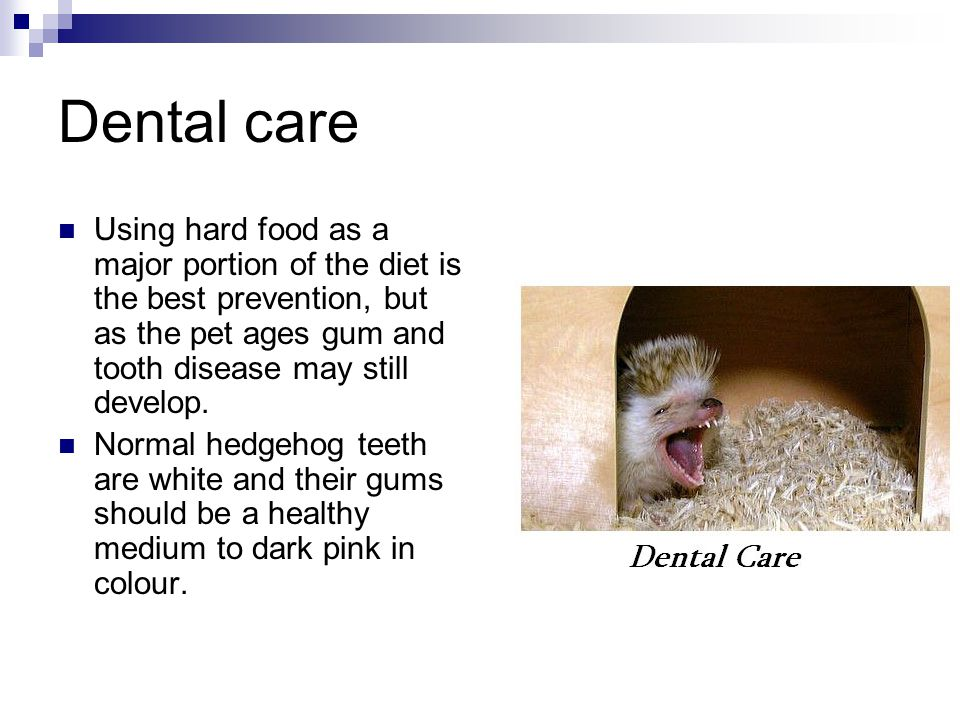 Dental care Using hard food as a major portion of the diet is the best prevention, but as the pet ages gum and tooth disease may still develop. Normal