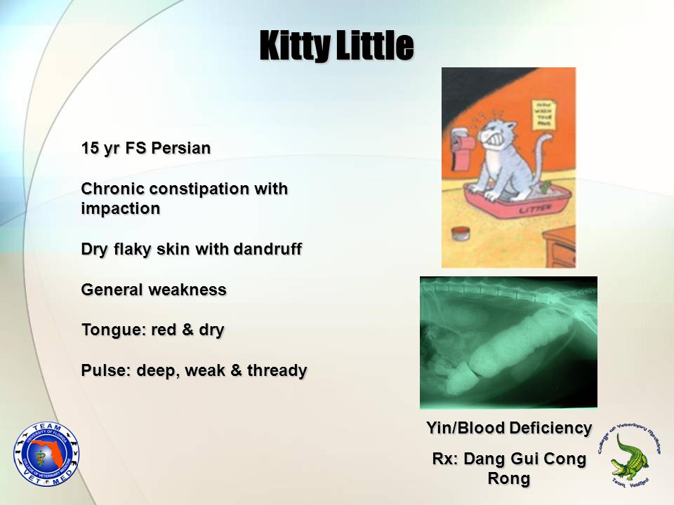 Kitty Little 15 yr FS Persian Chronic constipation with impaction Dry flaky skin with dandruff General weakness Tongue: red & dry Pulse: deep, weak &
