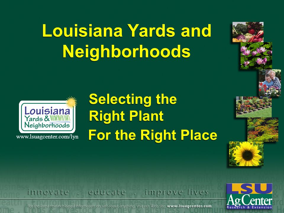 Louisiana Yards and Neighborhoods For the Right Place www.lsuagcenter.com/lyn Selecting the Right Plant