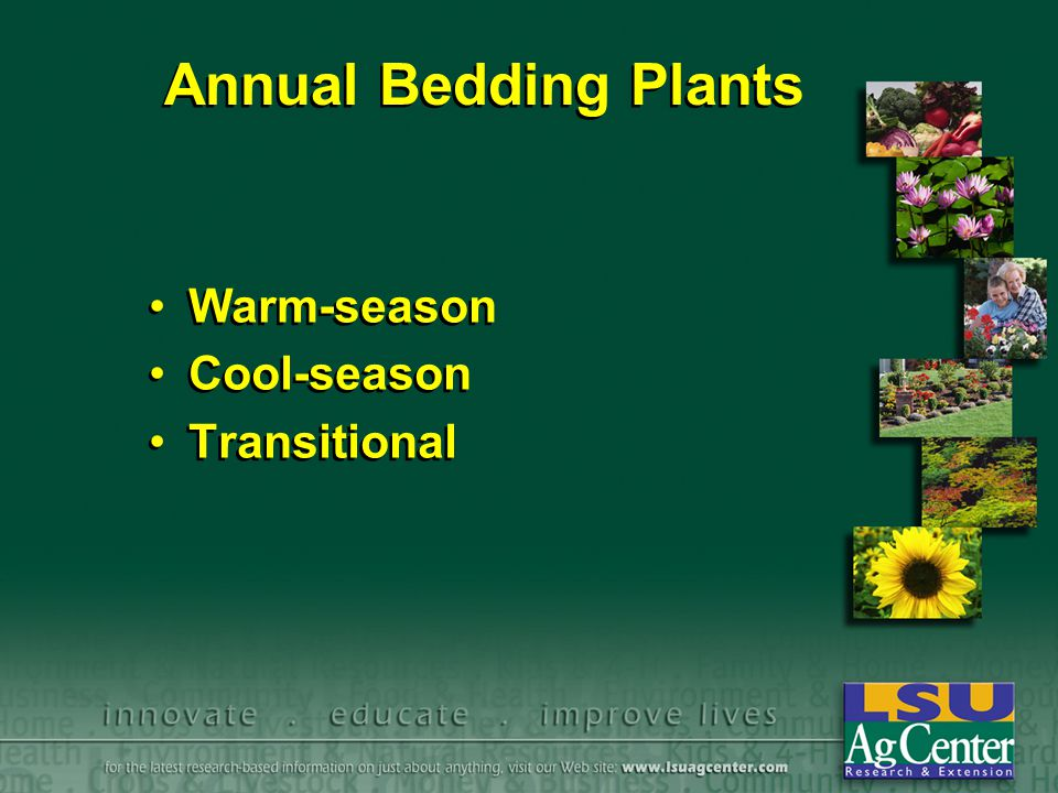 Annual Bedding Plants Warm-season Cool-season Transitional Warm-season Cool-season Transitional