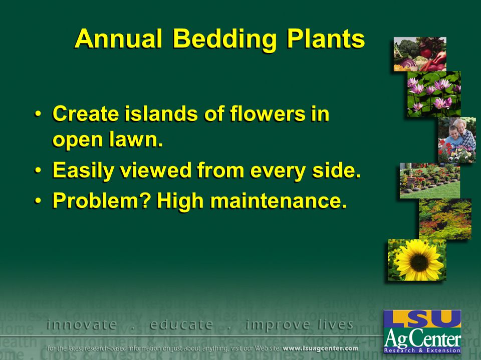 Annual Bedding Plants Create islands of flowers in open lawn. Easily viewed from every side. Problem? High maintenance. Create islands of flowers in o