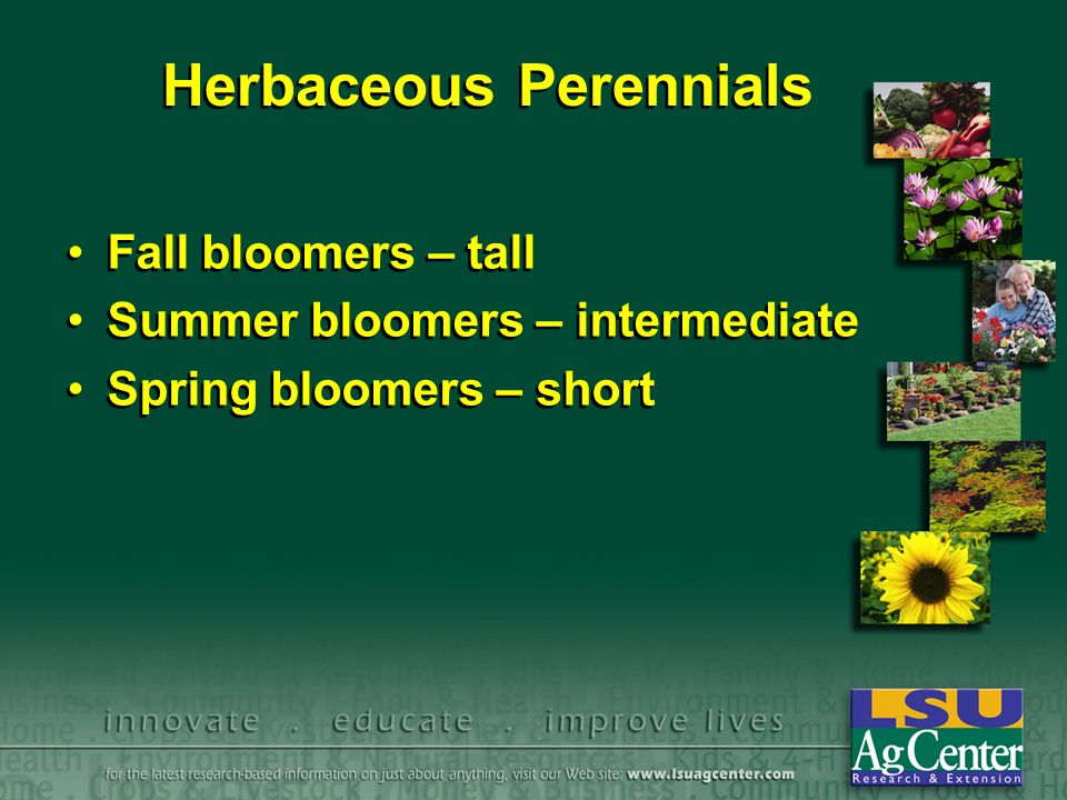 Herbaceous Perennials Fall bloomers – tall Summer bloomers – intermediate Spring bloomers – short Fall bloomers – tall Summer bloomers – intermediate