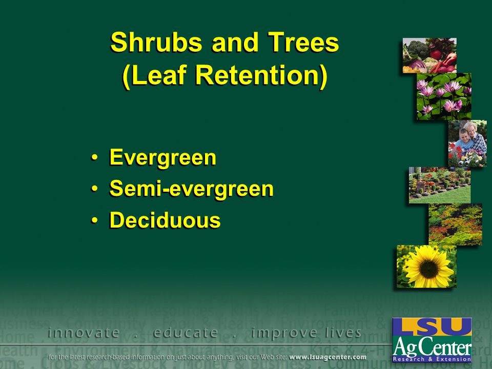 Shrubs and Trees (Leaf Retention) Evergreen Semi-evergreen Deciduous Evergreen Semi-evergreen Deciduous