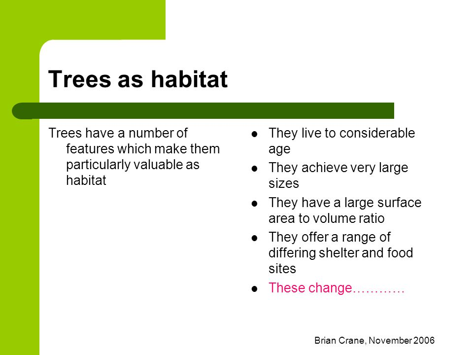 Brian Crane, November 2006 Trees as habitat Trees have a number of features which make them particularly valuable as habitat They live to considerable
