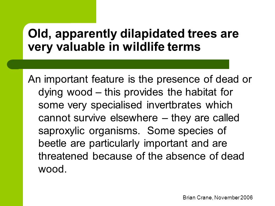 Brian Crane, November 2006 Old, apparently dilapidated trees are very valuable in wildlife terms An important feature is the presence of dead or dying