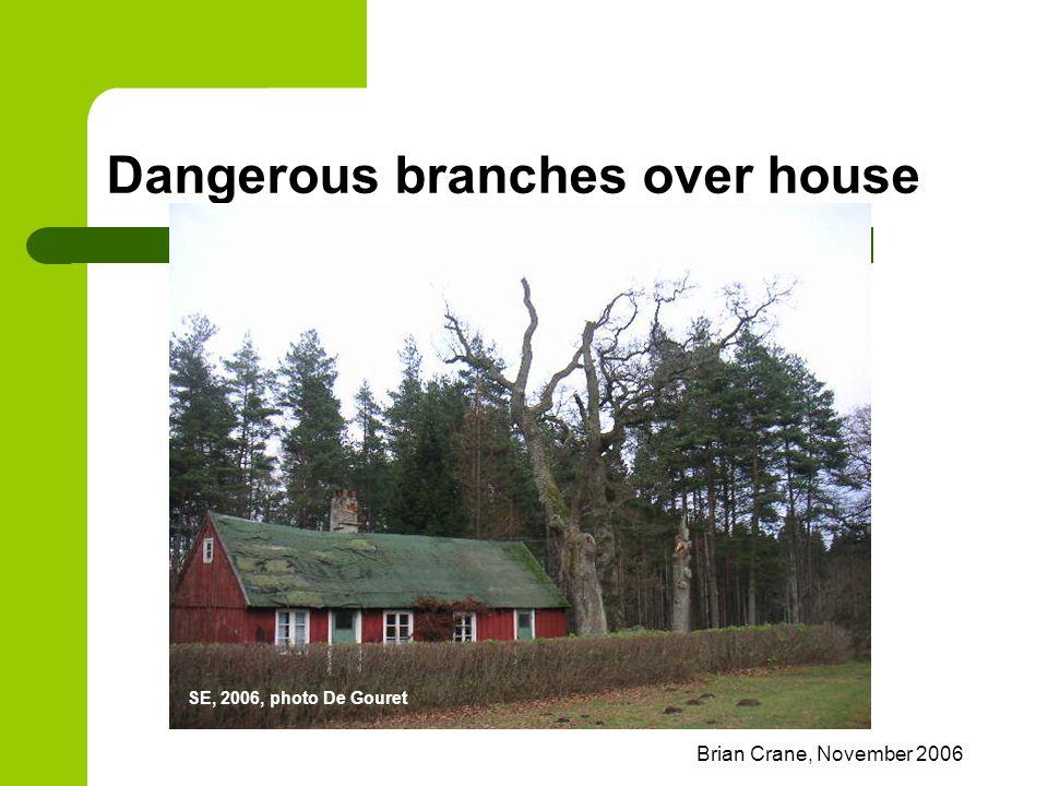 Brian Crane, November 2006 Dangerous branches over house SE, 2006, photo De Gouret