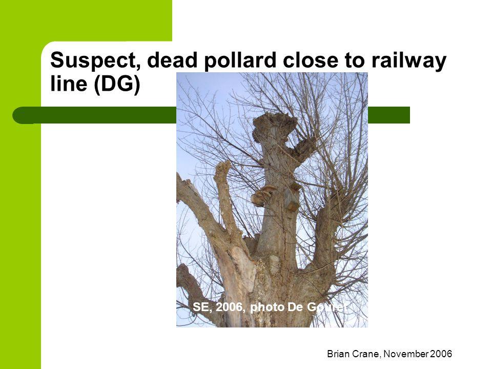 Brian Crane, November 2006 Suspect, dead pollard close to railway line (DG) SE, 2006, photo De Gouret