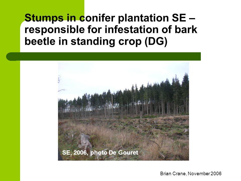 Brian Crane, November 2006 Stumps in conifer plantation SE – responsible for infestation of bark beetle in standing crop (DG) SE, 2006, photo De Goure