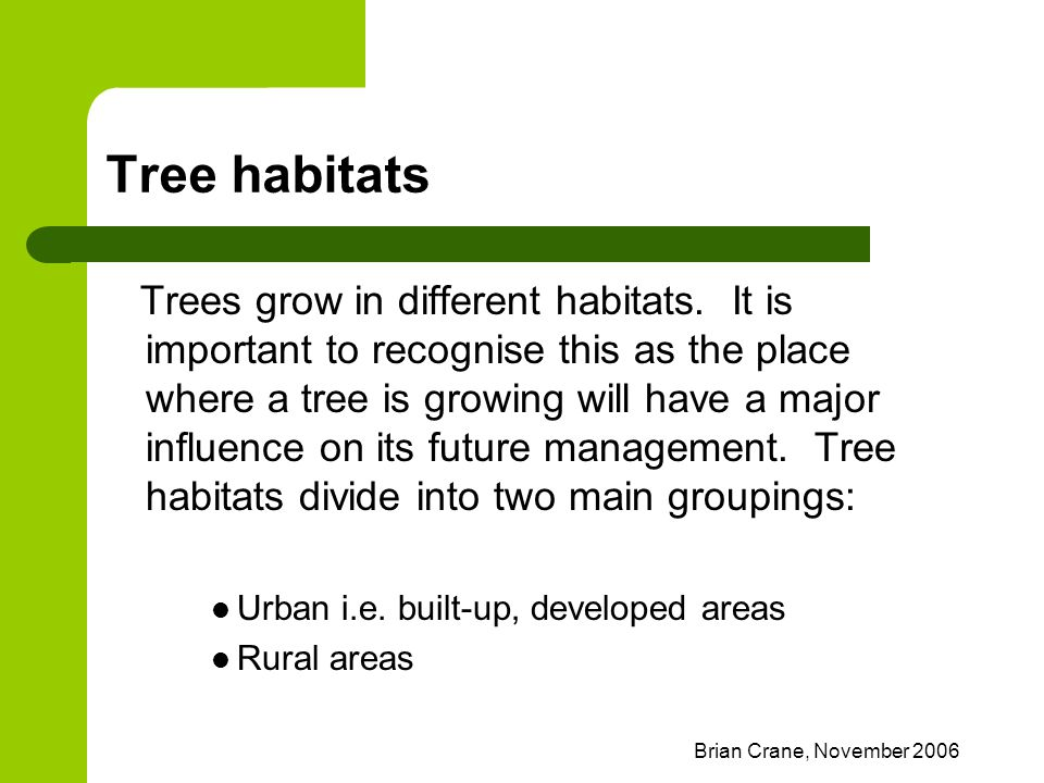 Brian Crane, November 2006 Tree habitats Trees grow in different habitats. It is important to recognise this as the place where a tree is growing will