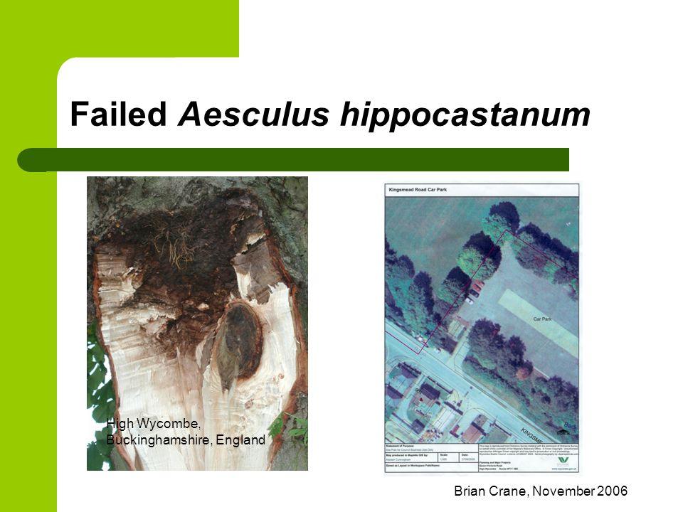 Brian Crane, November 2006 Failed Aesculus hippocastanum High Wycombe, Buckinghamshire, England