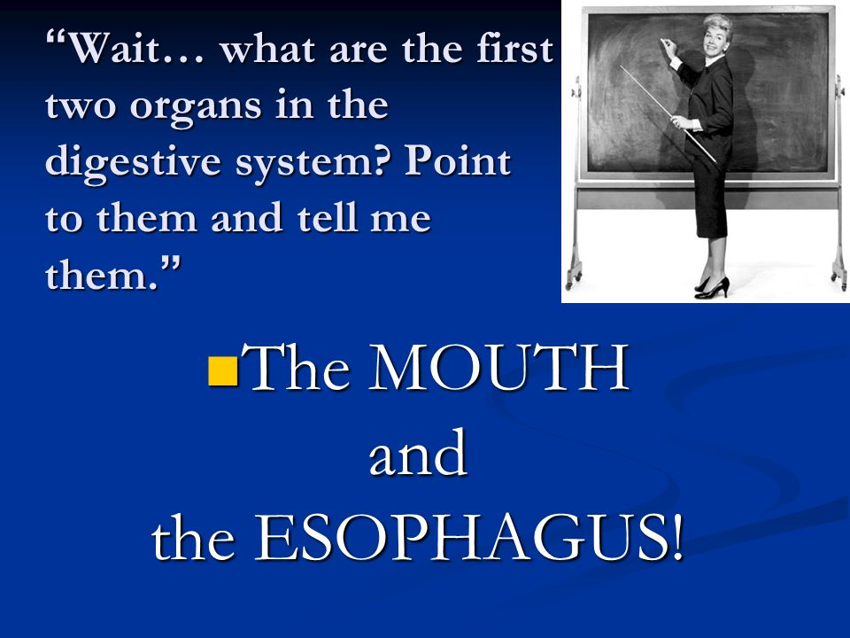 """ Wait… what are the first two organs in the digestive system? Point to them and tell me them. "" The MOUTH and the ESOPHAGUS!"