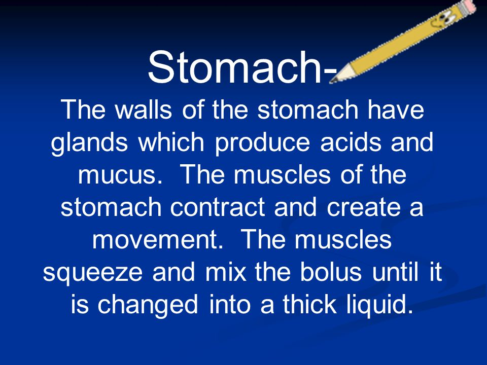 Stomach- The walls of the stomach have glands which produce acids and mucus. The muscles of the stomach contract and create a movement. The muscles sq