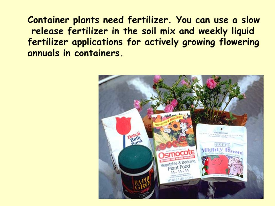 Container plants need fertilizer. You can use a slow release fertilizer in the soil mix and weekly liquid fertilizer applications for actively growing