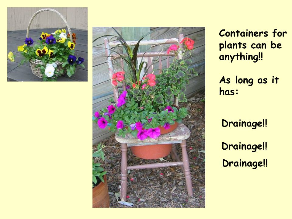 Containers for plants can be anything!! As long as it has: Drainage!!