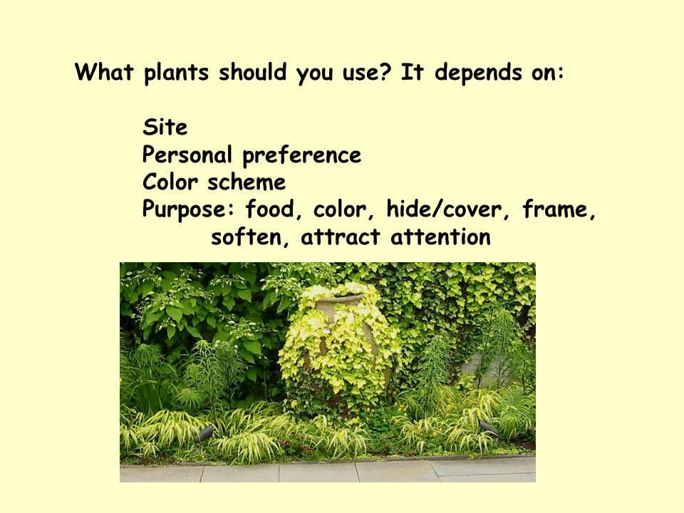 What plants should you use? It depends on: Site Personal preference Color scheme Purpose: food, color, hide/cover, frame, soften, attract attention