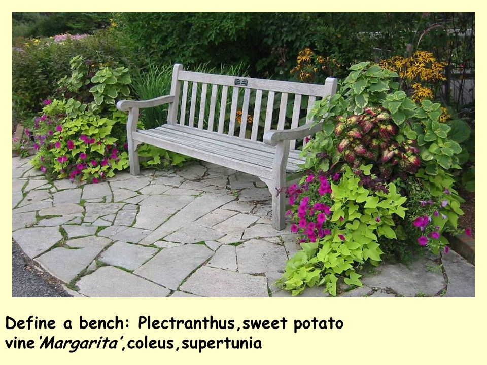 Define a bench: Plectranthus,sweet potato vine'Margarita',coleus,supertunia