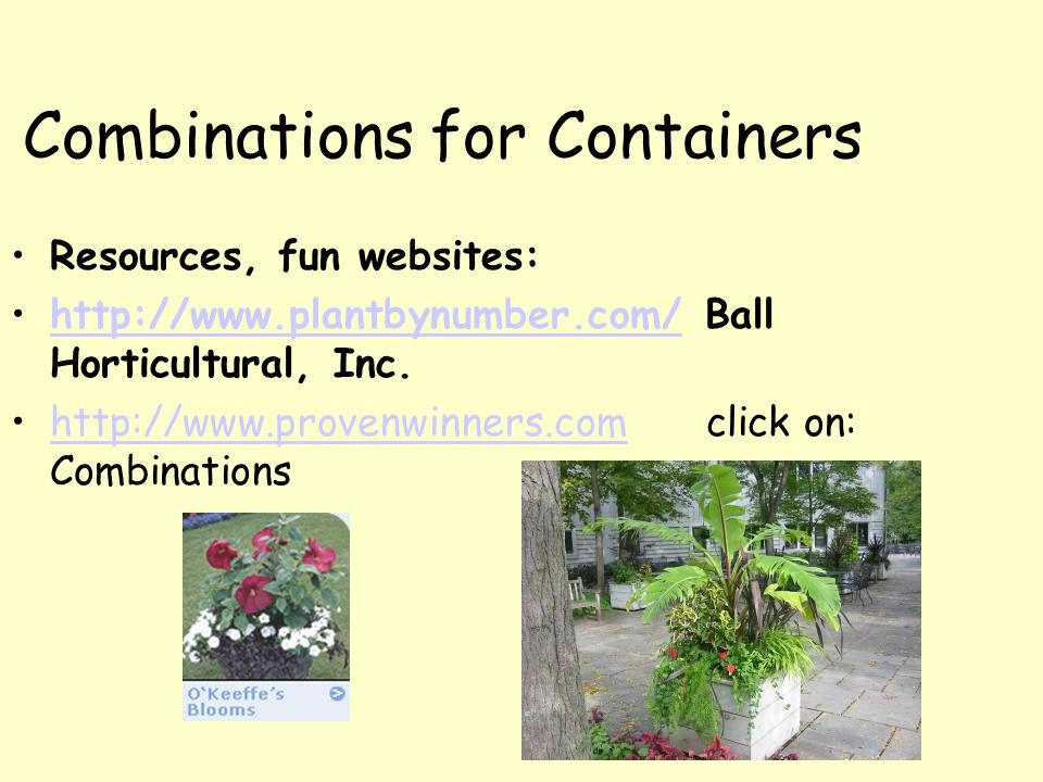 Combinations for Containers Resources, fun websites: http://www.plantbynumber.com/ Ball Horticultural, Inc.http://www.plantbynumber.com/ http://www.pr