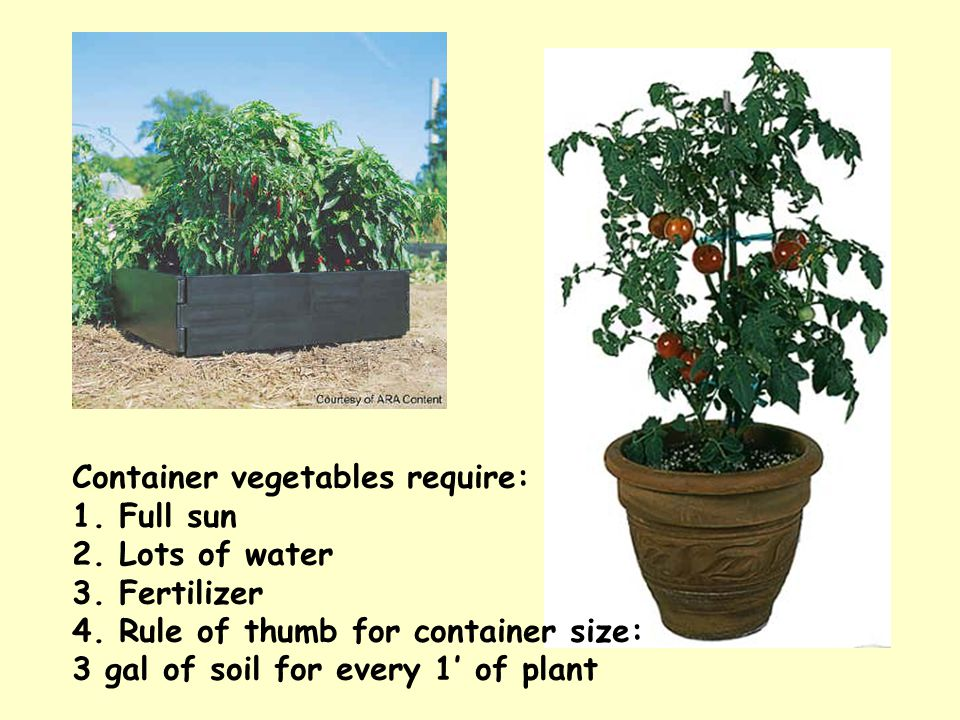 Container vegetables require: 1. Full sun 2. Lots of water 3. Fertilizer 4. Rule of thumb for container size: 3 gal of soil for every 1' of plant