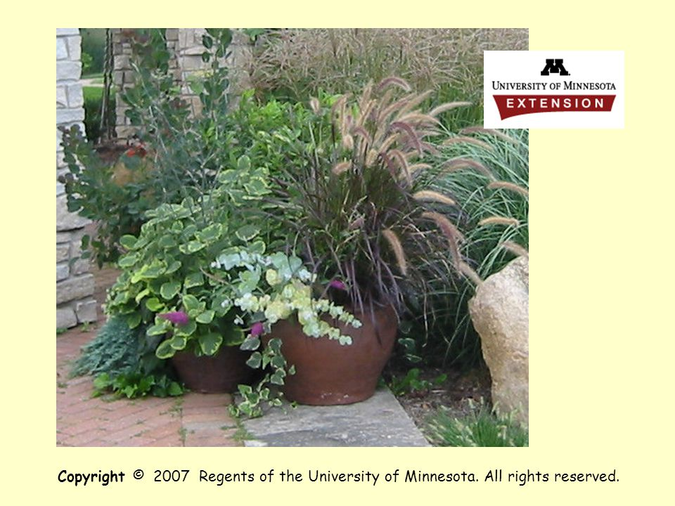 . Copyright © 2007 Regents of the University of Minnesota. All rights reserved.