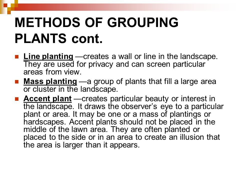 METHODS OF GROUPING PLANTS cont. Line planting —creates a wall or line in the landscape. They are used for privacy and can screen particular areas fro