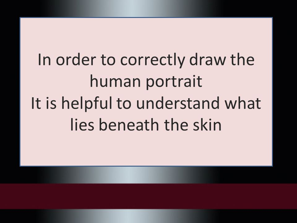 In order to correctly draw the human portrait It is helpful to understand what lies beneath the skin