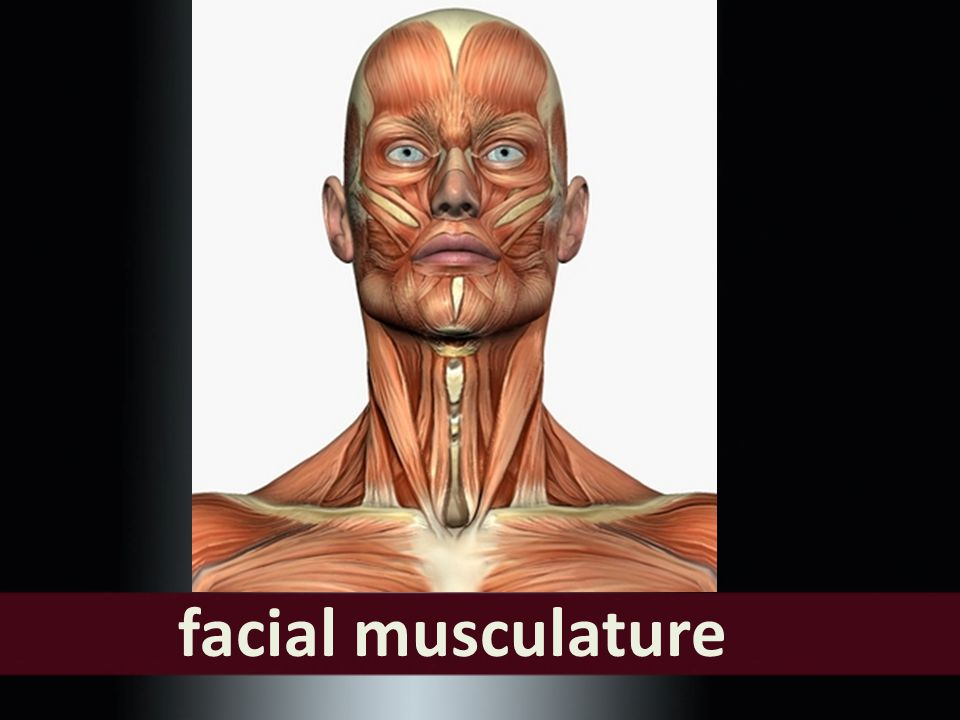 The Structure of the Neck