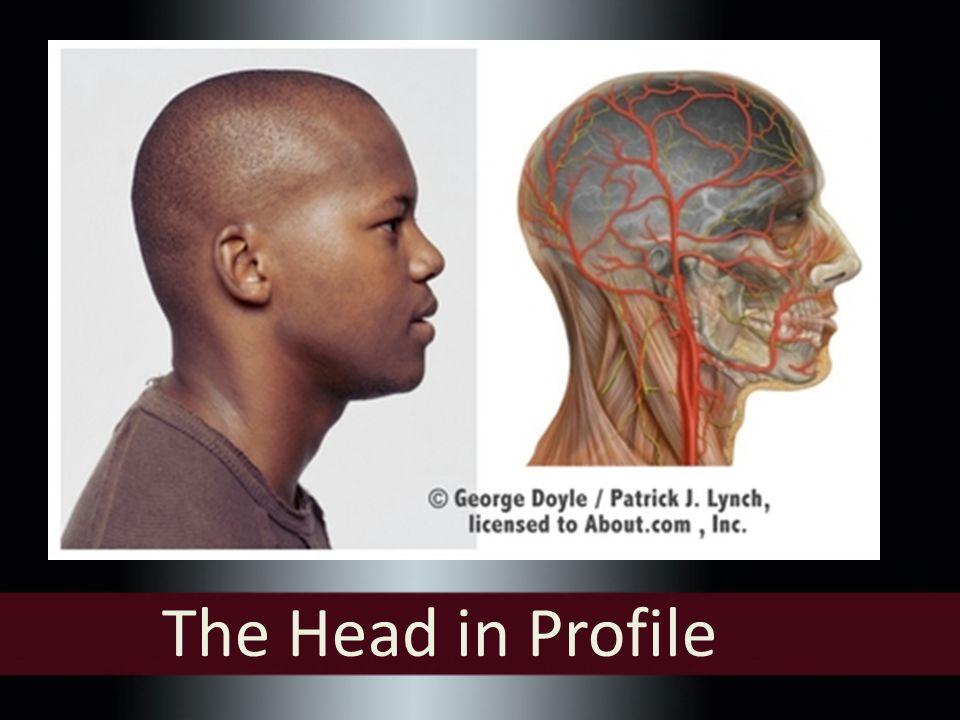 Proportions of the Face by Leonardo Da Vinci