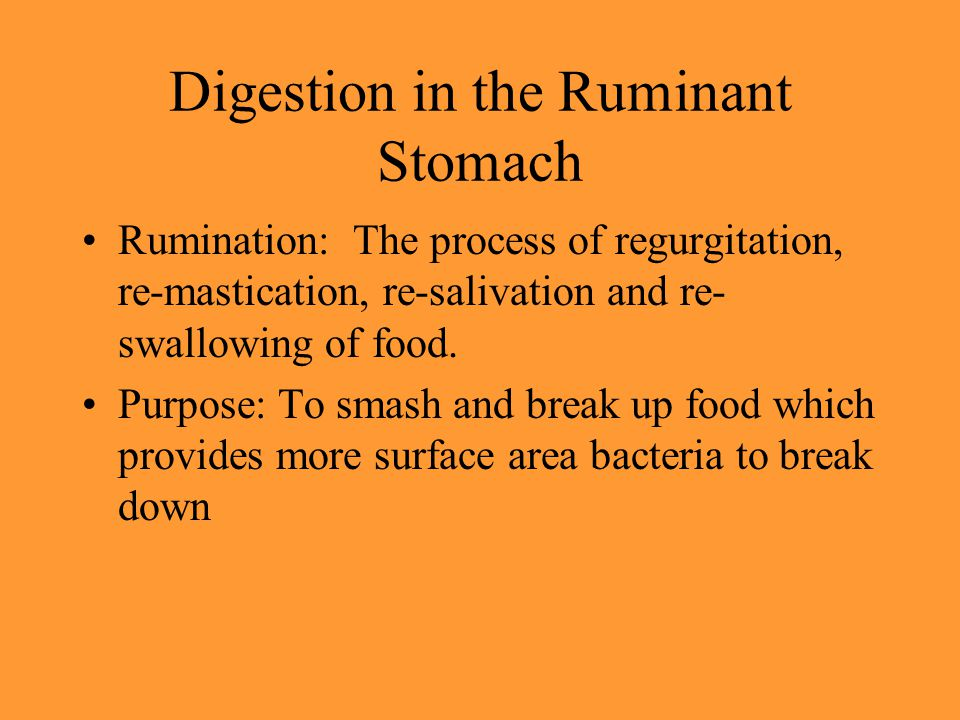 Digestion in the Ruminant Stomach Rumination: The process of regurgitation, re-mastication, re-salivation and re- swallowing of food. Purpose: To smas