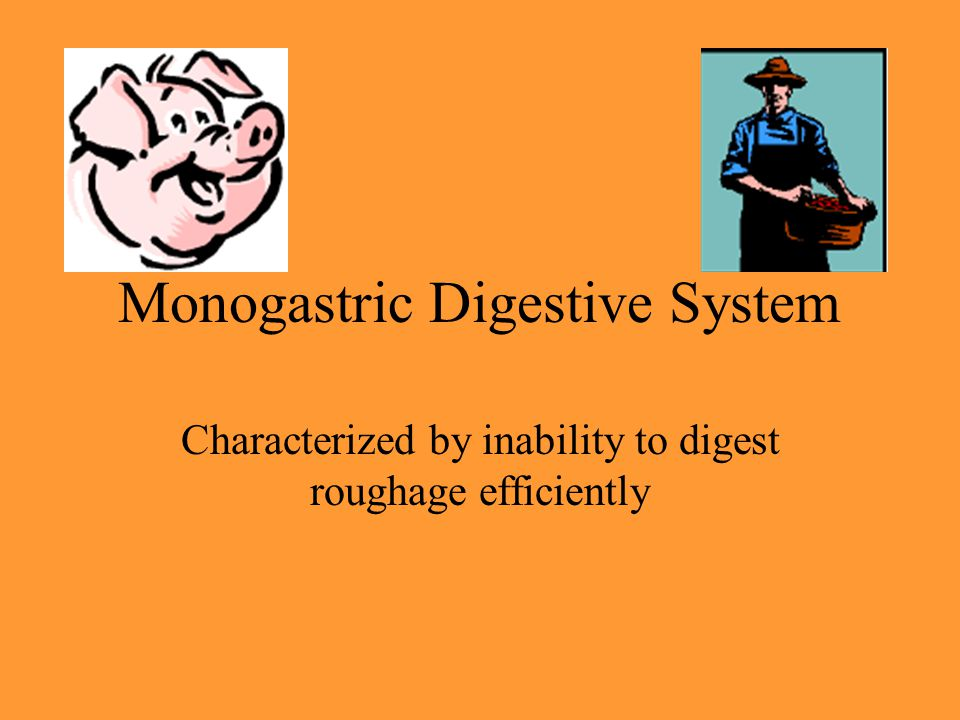 Monogastric Digestive System Characterized by inability to digest roughage efficiently