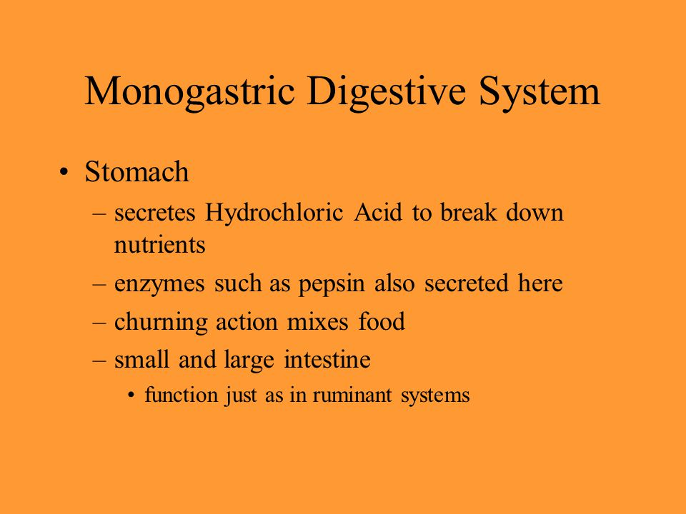 Monogastric Digestive System Stomach –secretes Hydrochloric Acid to break down nutrients –enzymes such as pepsin also secreted here –churning action m