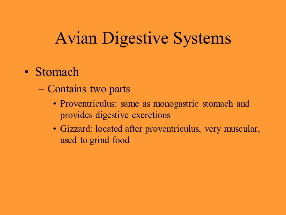 Avian Digestive Systems Stomach –Contains two parts Proventriculus: same as monogastric stomach and provides digestive excretions Gizzard: located aft