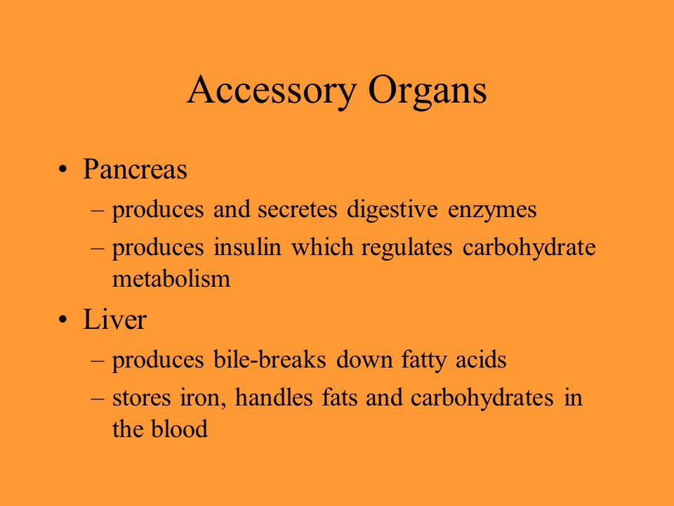 Accessory Organs Pancreas –produces and secretes digestive enzymes –produces insulin which regulates carbohydrate metabolism Liver –produces bile-brea