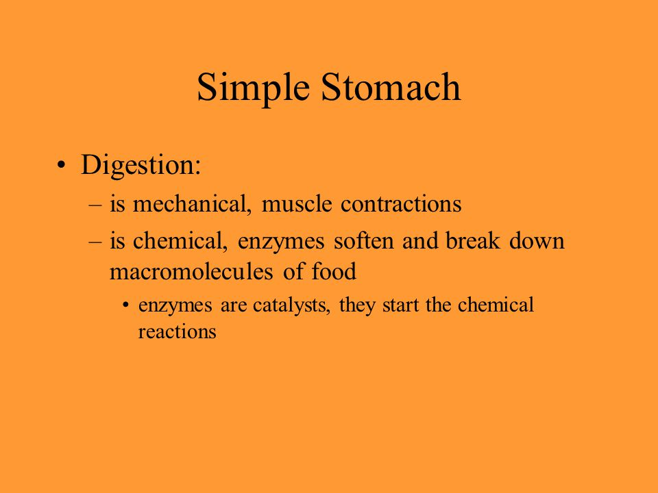 Simple Stomach Digestion: –is mechanical, muscle contractions –is chemical, enzymes soften and break down macromolecules of food enzymes are catalysts