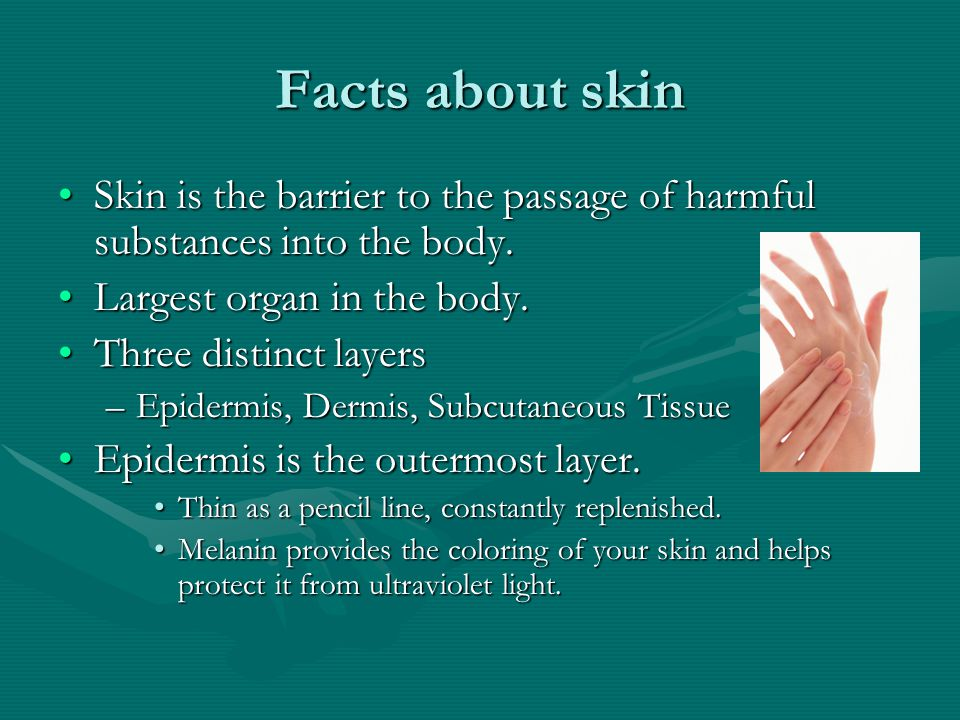 Facts continued… Dermis is beneath the EpidermisDermis is beneath the Epidermis –Makes up 90% of your skin.