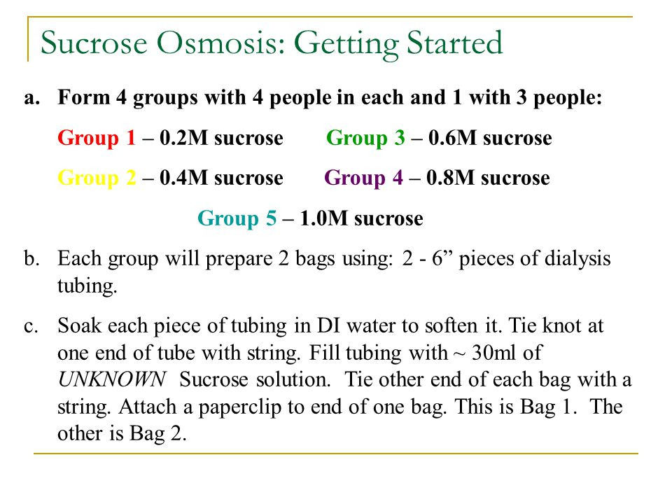 Sucrose Osmosis: Getting Started a.Form 4 groups with 4 people in each and 1 with 3 people: Group 1 – 0.2M sucrose Group 3 – 0.6M sucrose Group 2 – 0.