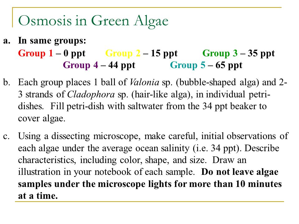 Osmosis in Green Algae a.In same groups: Group 1 – 0 ppt Group 2 – 15 ppt Group 3 – 35 ppt Group 4 – 44 ppt Group 5 – 65 ppt b.Each group places 1 bal