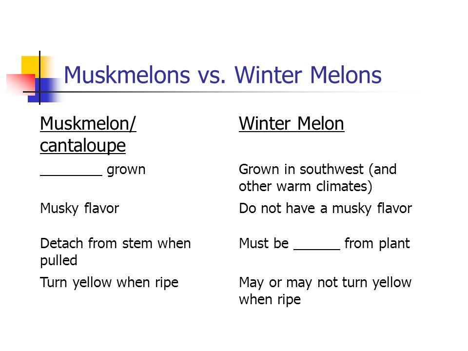 Muskmelons vs.