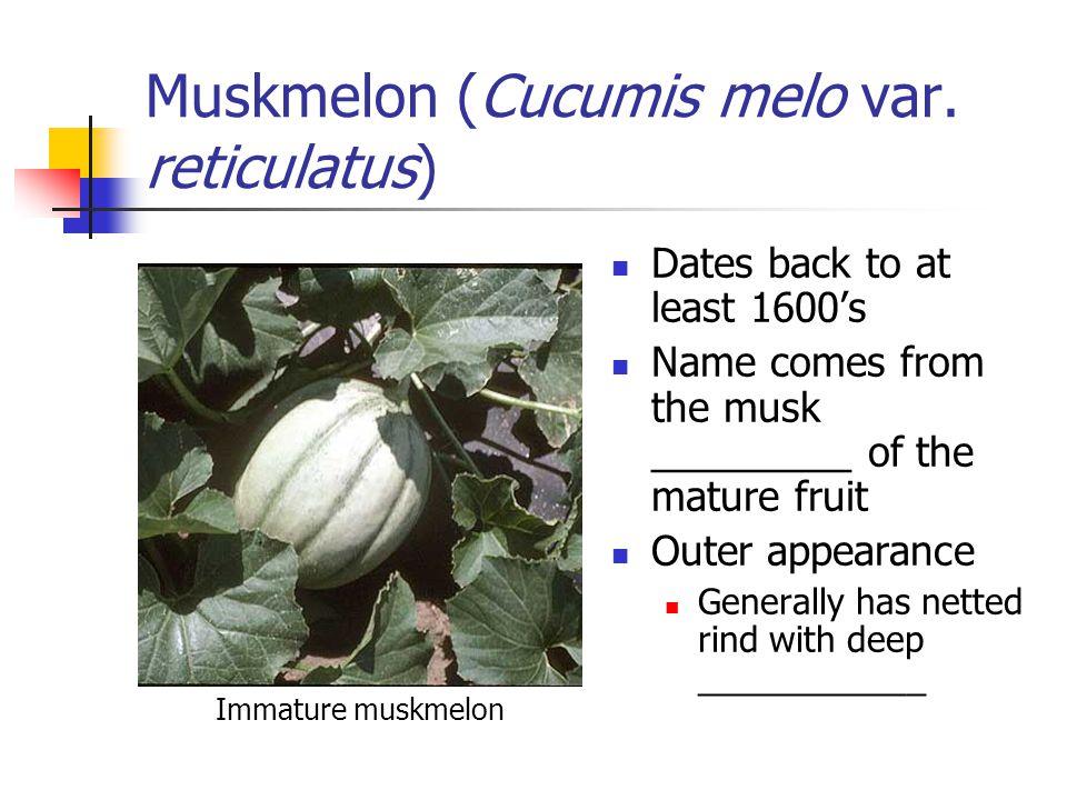 Muskmelon (Cucumis melo var.