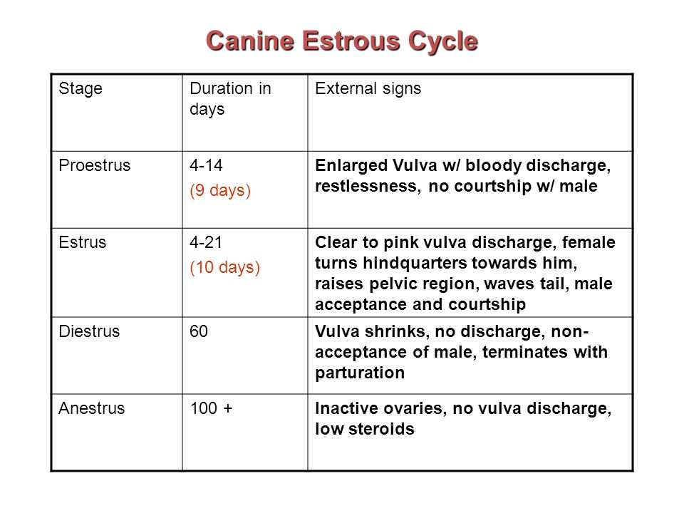 Reproduction Estrus every 6-8 months Estrus lasts 21-22 days Ovulation about 10 th day Pseudopregnancy common