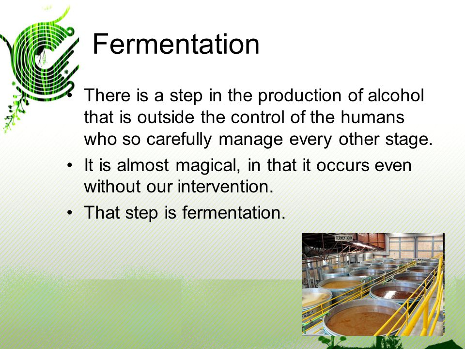 Fermentation There is a step in the production of alcohol that is outside the control of the humans who so carefully manage every other stage.