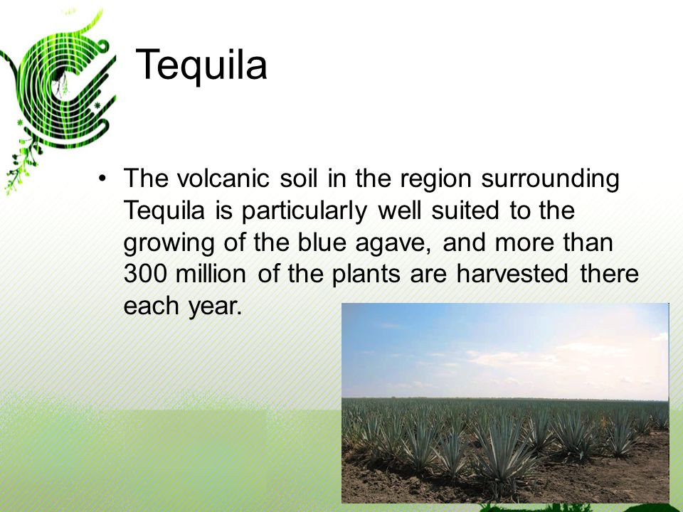 Tequila The volcanic soil in the region surrounding Tequila is particularly well suited to the growing of the blue agave, and more than 300 million of the plants are harvested there each year.