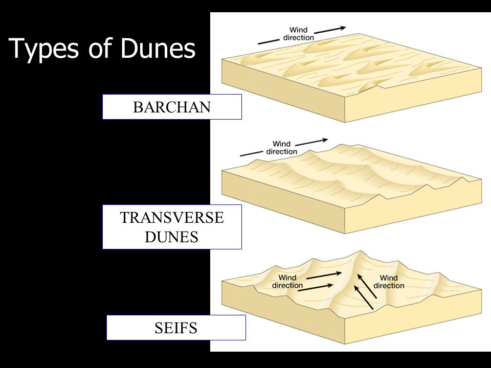 Types of Dunes BARCHAN TRANSVERSE DUNES SEIFS