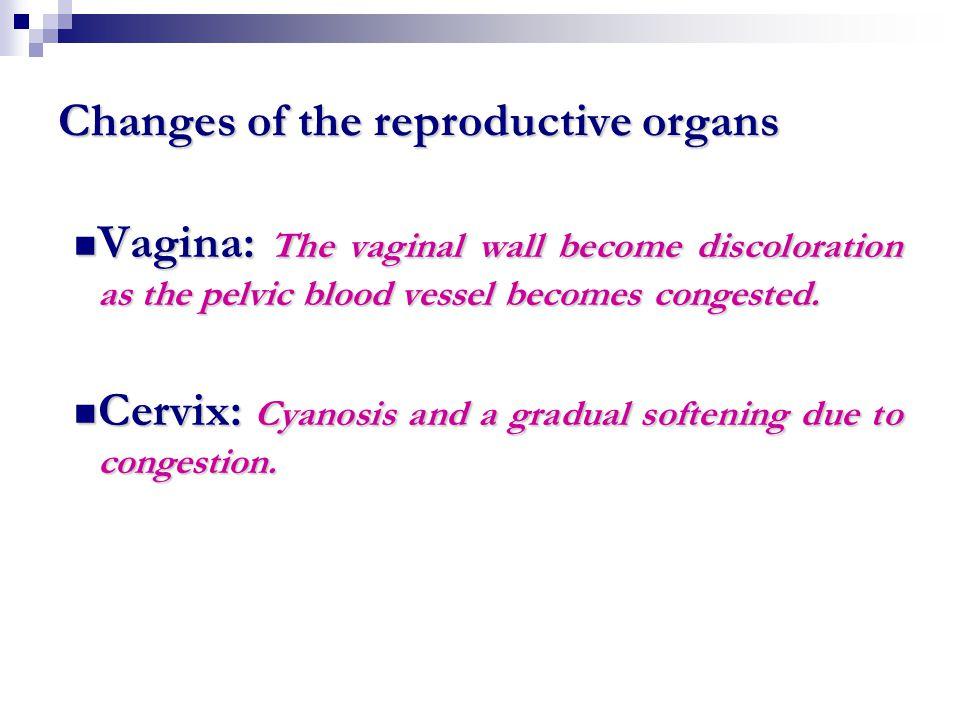 Uterus: Uterus: Enlargement and softening.