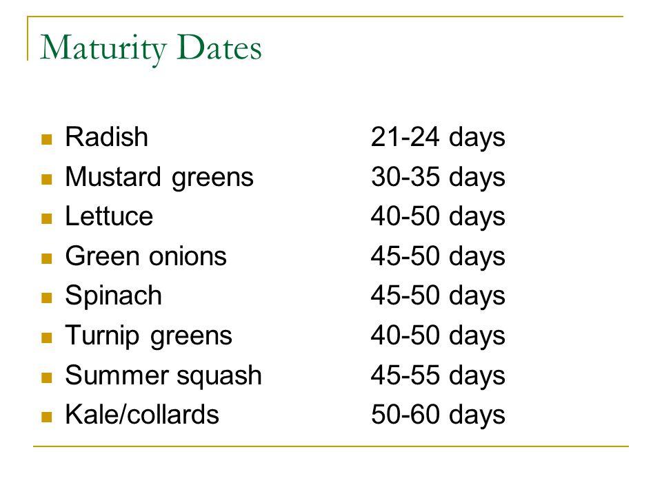 Maturity Dates Radish 21-24 days Mustard greens30-35 days Lettuce40-50 days Green onions45-50 days Spinach45-50 days Turnip greens40-50 days Summer squash45-55 days Kale/collards50-60 days