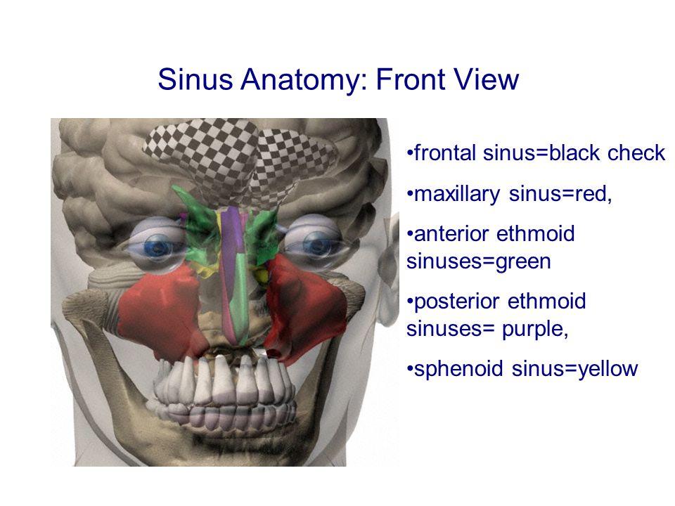 Sinus Anatomy: Front View frontal sinus=black check maxillary sinus=red, anterior ethmoid sinuses=green posterior ethmoid sinuses= purple, sphenoid sinus=yellow