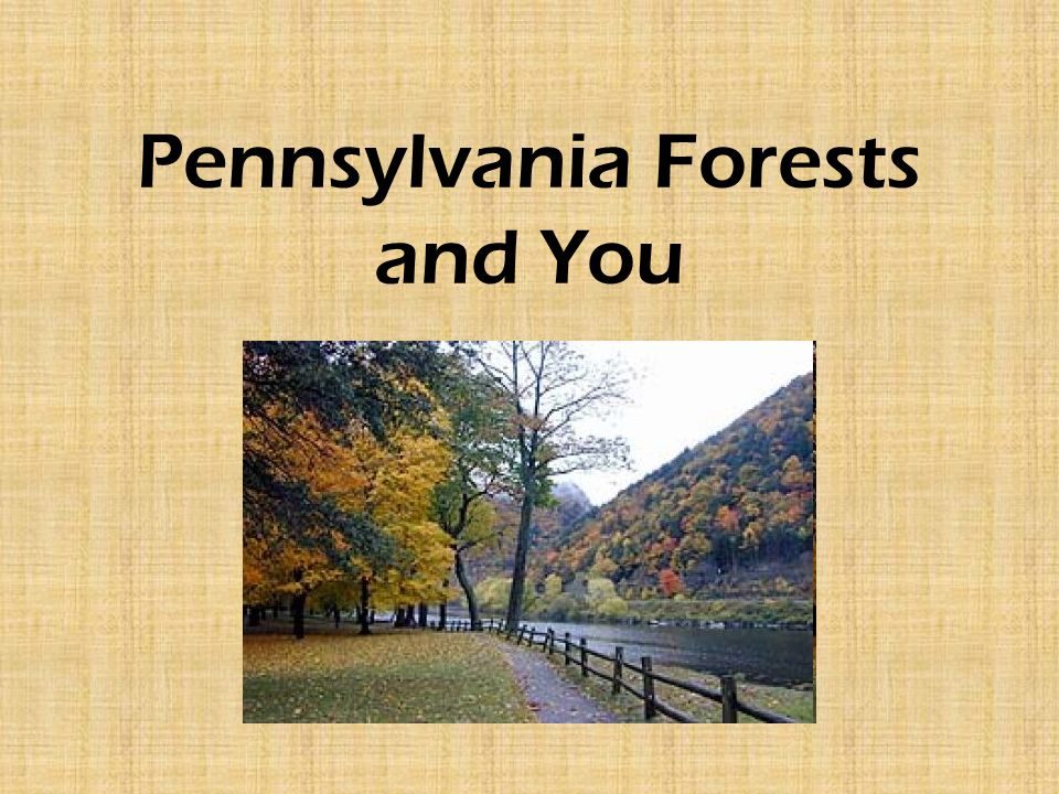 Pennsylvania Forests and You