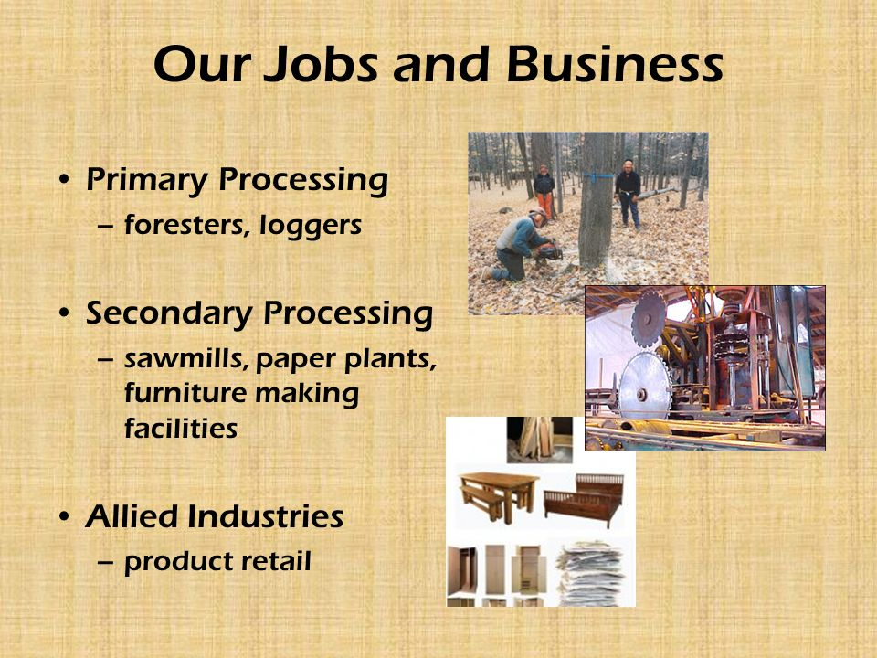 Our Jobs and Business Primary Processing –foresters, loggers Secondary Processing –sawmills, paper plants, furniture making facilities Allied Industries –product retail