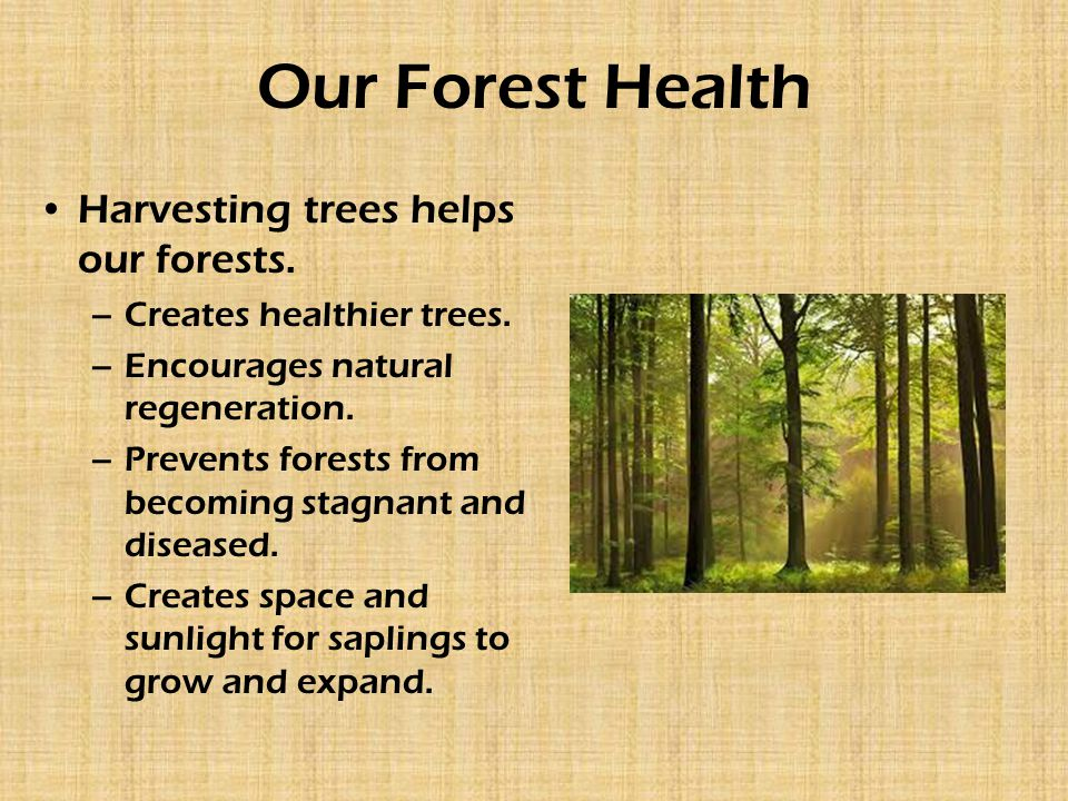 Our Forest Health Harvesting trees helps our forests. –Creates healthier trees. –Encourages natural regeneration. –Prevents forests from becoming stag