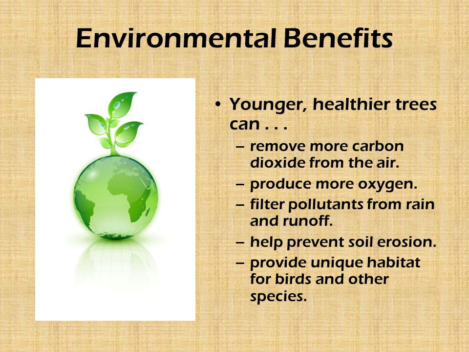 Environmental Benefits Younger, healthier trees can...